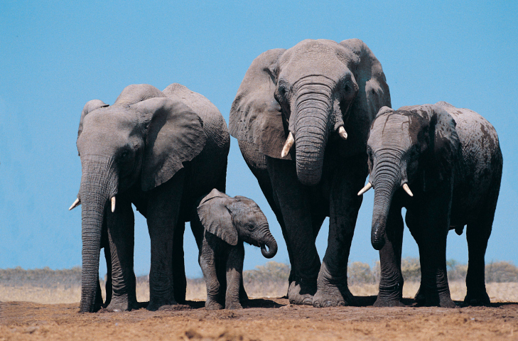 The Religious Significance And Treatment Of Elephants