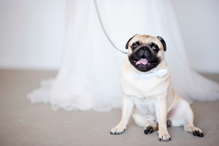 Pets and weddings.
