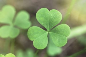 Ireland and Irish culture are celebrated on St. Patrick's Day.